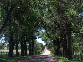 Road through Trees