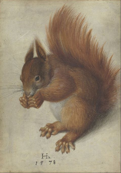 Red Squirrel, Hans Hoffman, 1578